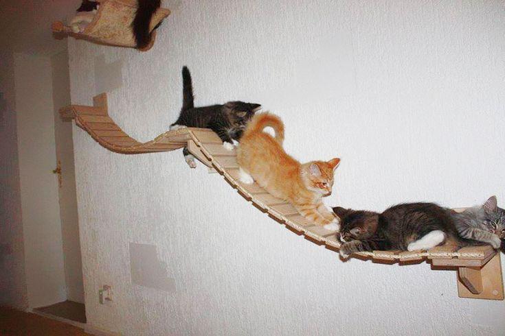 Du mobilier pour transformer une pièce, un salon par exemple, en aire de jeux pour chat.