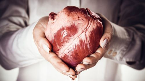 Die wichtigsten Fragen rund um die Organspende