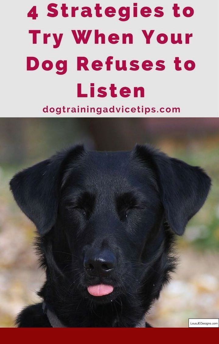 How To Train Your Dog To Not Run Away From You And Pics Of Tips On