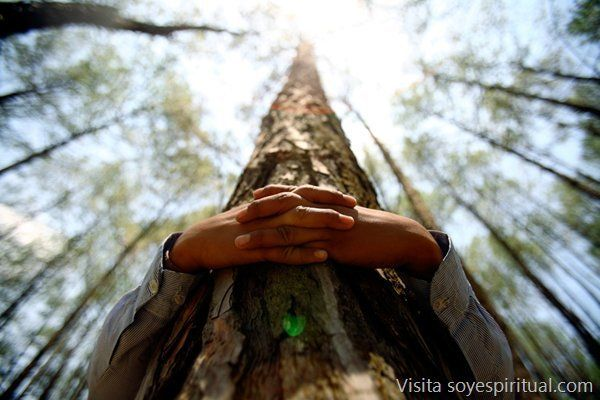 Las 14 especies de árboles que al abrazarlos sanan diversas partes del cuerpo Tradicionalmente, en el taoísmo y en multitud de culturas, los árboles son considerados como el eje vertical de toda la vida en la tierra. Sensibilizarnos con esa energía, despertar nuestro cuerpo y nuestra conciencia hacia ellos es un aprendizaje y una práctica