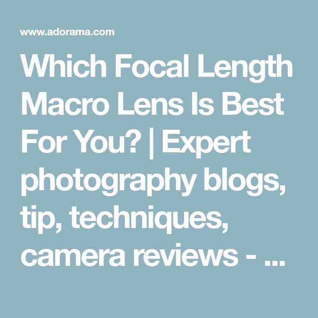 Which Focal Length Macro Lens Is Best For You? | Expert photography blogs, tip, techniques, camera reviews - Adorama Learning Center