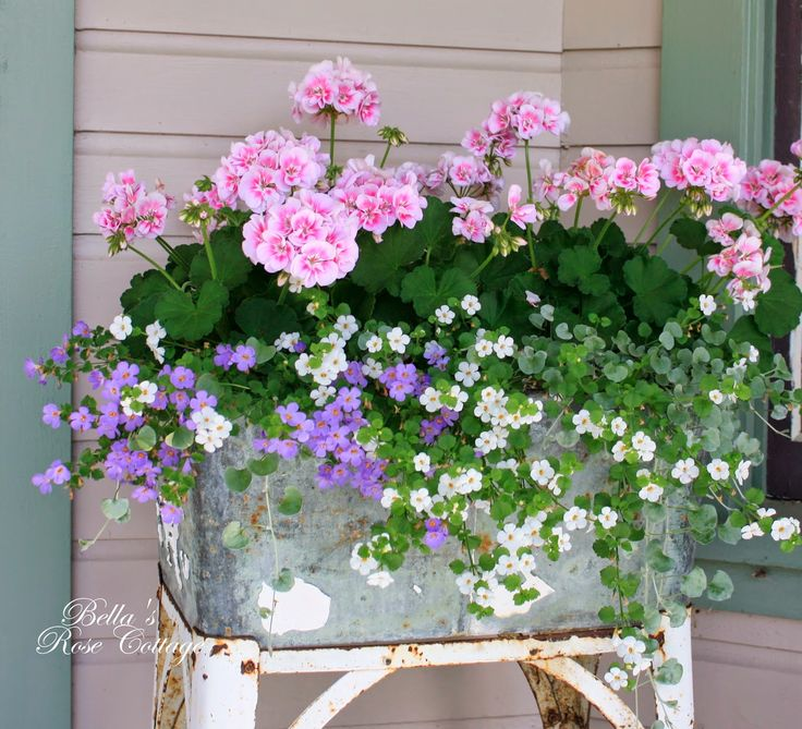 Beautiful flowers in a Galvanized Washtub Planter - Pink Geraniums, White and Purple Bacopa and the little wisps of grey foliage is Silver Falls Dichondra