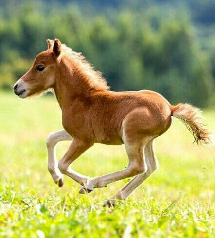 61 best images about Foals on Pinterest | Arabian horses ...