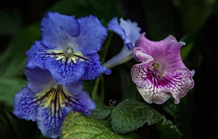 Güzel çiçekler, güzel renkler!