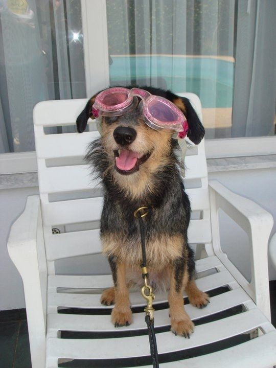 As aulas de natação que me aguardem.   25 provas de que um cão vira-lata pode ser tudo o que você precisa