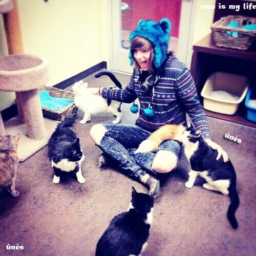 cute emo boy with cats!!!!!!!! My heart is dyeing ♥♥♥♥♥ ❇.     Is that Drake Christopher? I'm literally watching his videos right now.