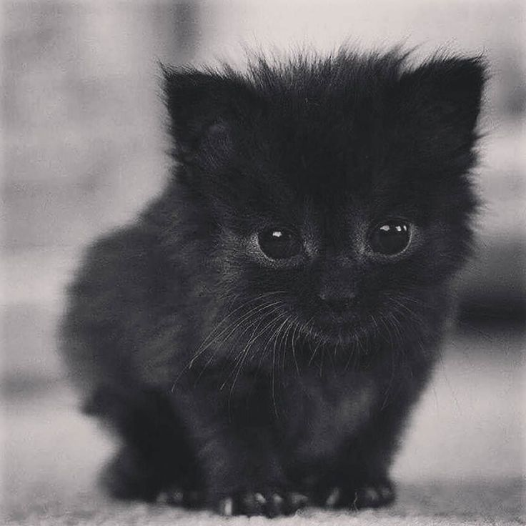 #Repost @blackcraftcult  Tag someone who loves cats! Photo: @homesweethell