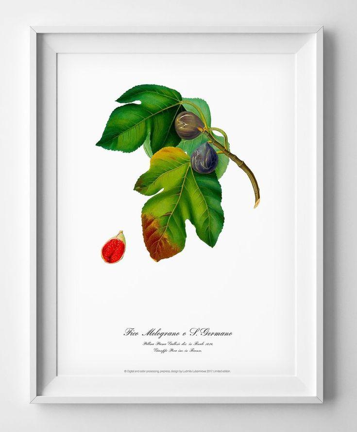 Figs Botanical art print watercolour poster vintage antique wall art home decor #Vintage