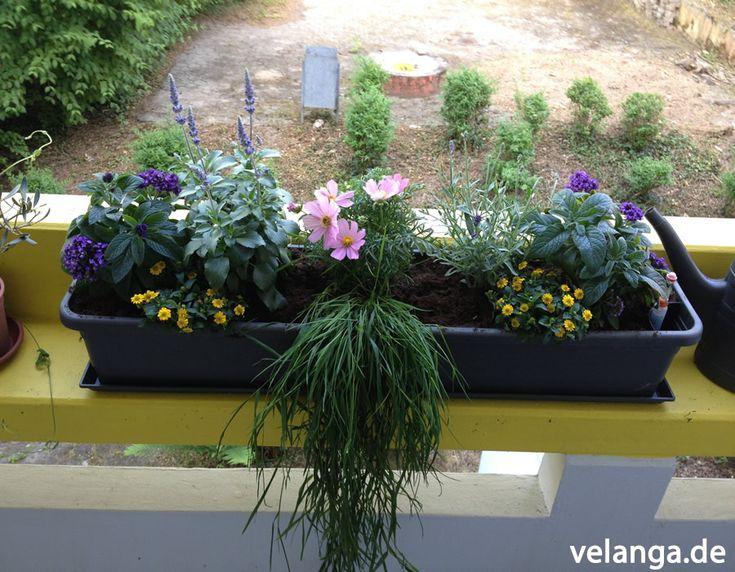 Ein bienenfreundlicher balkonkasten garten balkon for Bienenfreundlicher garten