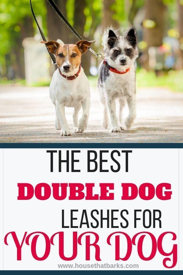 Rainy House Train Dog Dogoodbv Dogtrainingschedule In 2020 Dog