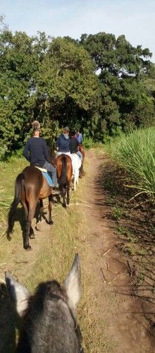Horse riding in Durban with Redwoods Riding Centre. For a unique, scenic and relaxing horse riding experience, Redwoods Riding Centre on the magnificent and fast-growing KZN North Coast is a must visit. Enjoy trails through the sugar belt, where there is an abundance of coastal forest, dams, natural water ways and viewpoints that make for very attractive rides. #dirtyboots #horseriding #durban