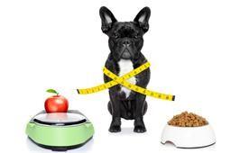 Dog Chocolate Toxicity Meter
