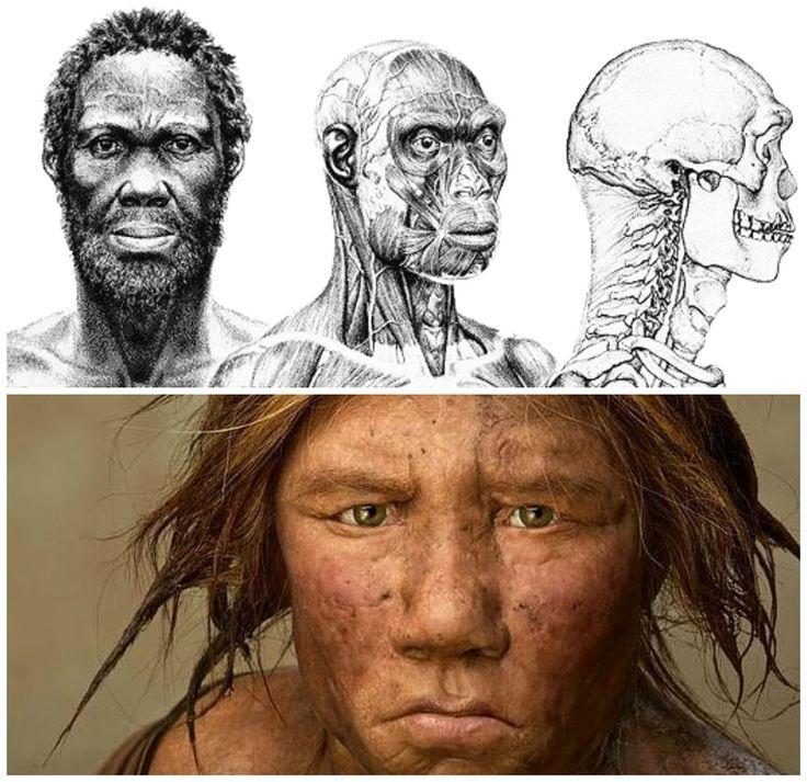 """38.Finalmente llegamos al género """"homo sapiens"""" que es sin duda el ser humano. Se consideran """"homo sapiens""""  a los que poseen tanto las características anatómica de las poblaciones humanas actuales como lo que se define como «comportamiento moderno». La evidencia más antigua de esta especie han sido en Etiopía y África hace alrededor de 150.000 años. Hay dos tipos de homos sapiens: Los homo sapiens  idaltu y los homo sapiens sapiens."""