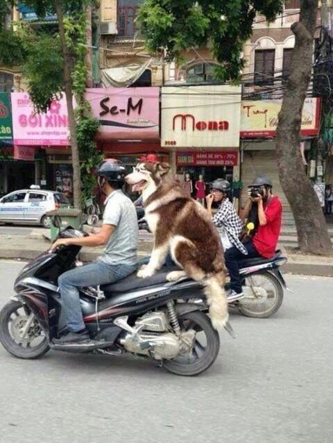 Dog taxi!