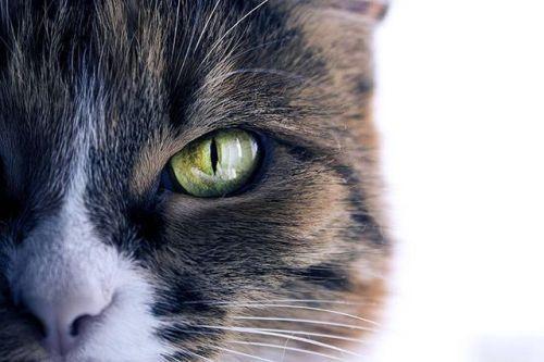 Однажды @awblashko подобрала на улице кошку похожую на маленького тигра. Теперь она с удовольствием позирует для хозяйки даже когда ее об этом не просят. Canon EOS 100D EF-S 18-55mm ƒ/3.5-5.6 IS STM Диафрагма: ƒ/5.6 Выдержка: 1/80 сек ISO: 250 #CanonPhoto #CanonRussia #LiveForTheStory via Canon on Instagram - #photographer #photography #photo #instapic #instagram #photofreak #photolover #nikon #canon #leica #hasselblad #polaroid #shutterbug #camera #dslr #visualarts #inspiration #artistic…
