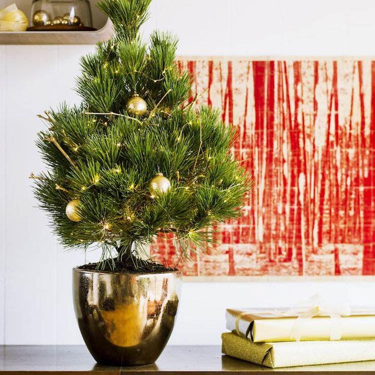 choisir son sapin de Noel naturel pot decoration dore #christmastree #natural #ideas #Noël