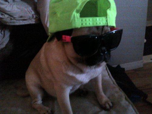Fresh Pug of Bel Air