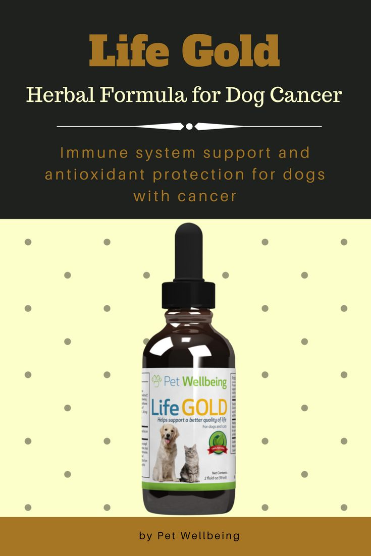 This herbal formula contains powerful antioxidants and immune-boosting herbs that can help dogs battling cancer. Check it out!