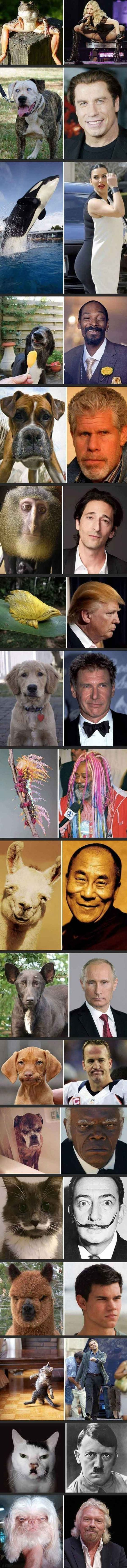 photo celebrities like animals