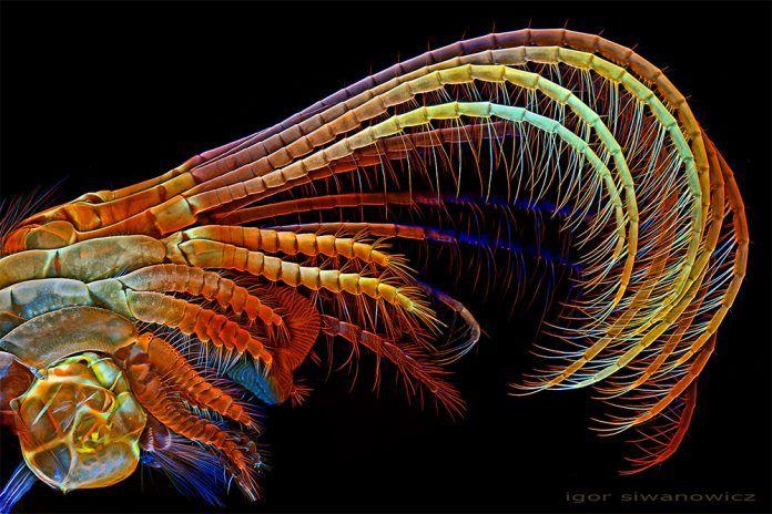 Imagini inedite cu microorganisme văzute la microscop
