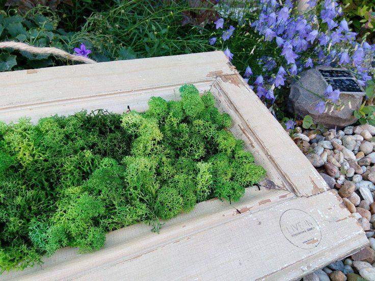Magazine :: Interesting facts :: Tie najkrajšie obrazy vytvára príroda sama. Preneste si kúsok zelene domov a zarámujte si mach!