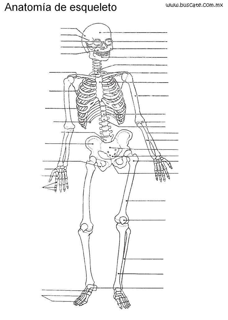 Esqueleto humano sin nombres, para escribirlos. | Alemán | Pinterest ...