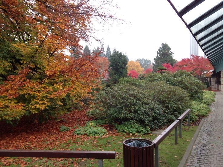 Herbstanfang, Planten un Blumen