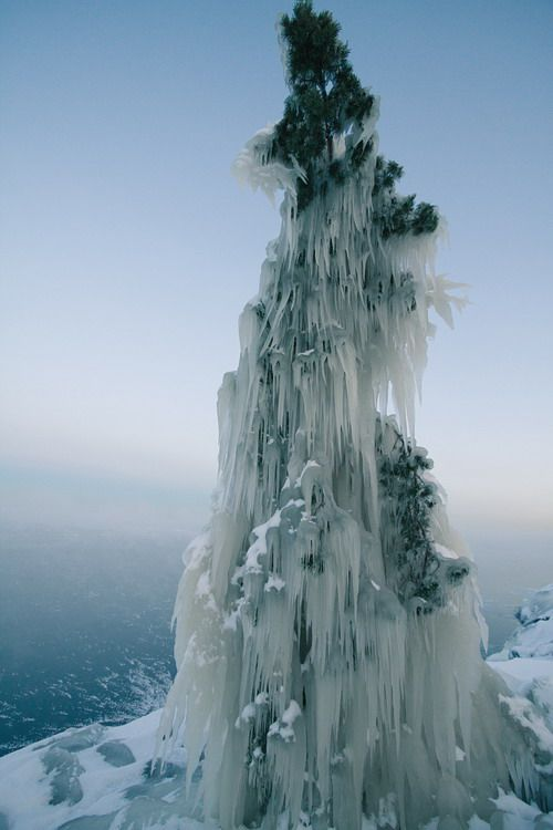 Tree laden with ice along the shore of Lake Lagoda following an ice storm. Lake Ladoga is a freshwater lake located in northwestern Russia just outside the outskirts of Saint Petersburg.