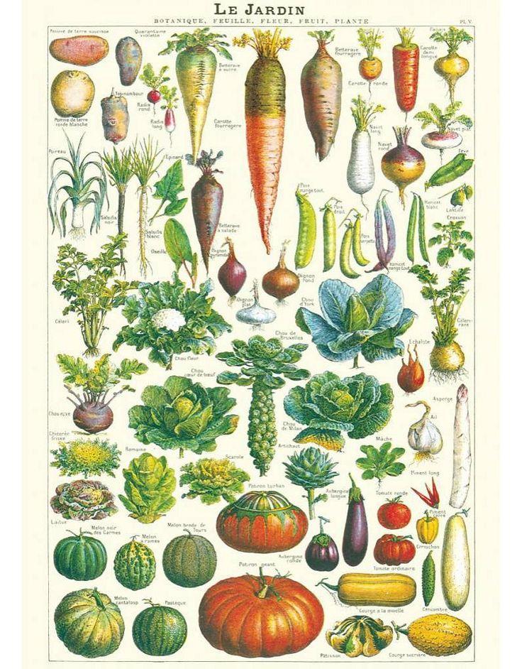 Cavallini Weinlese-Schule Poster Le Jardin