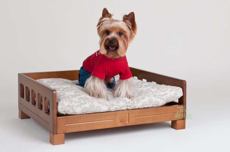 Who is there? Teddy on his perfect bed for dogs