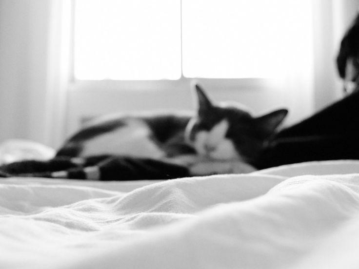 Neko #cat #gato #bed #cama