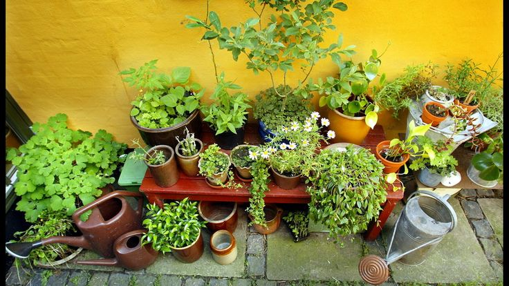 Gør det nemt i haven: Disse planter skal du IKKE så selv - TV 2