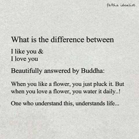 Difference between like and love.