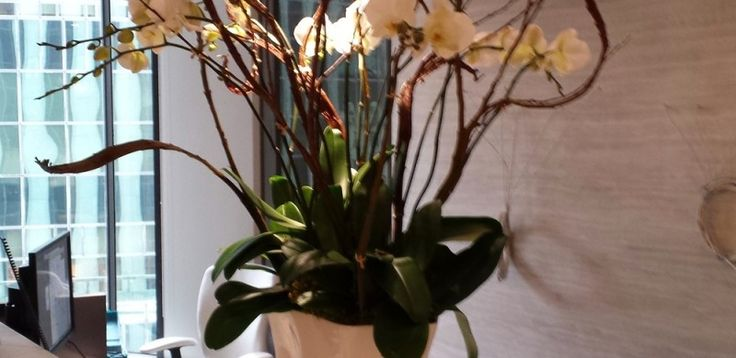 How beautiful orchid arrangement is this at theorchidcollection shop!!!
