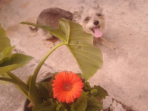And puppy's first flower.