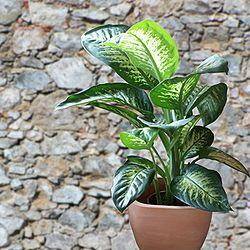 250 best images about zimmerpflanzen auf pinterest kaktus haus und pflanzen. Black Bedroom Furniture Sets. Home Design Ideas
