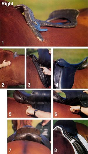 Saddle fit tips - EVERY RIDER SHOULD KNOW - they should still have a master saddle fitter check the saddle, but check it before you ride to prevent injuries! horses are always changing muscle tone, just like humans. #mike1242