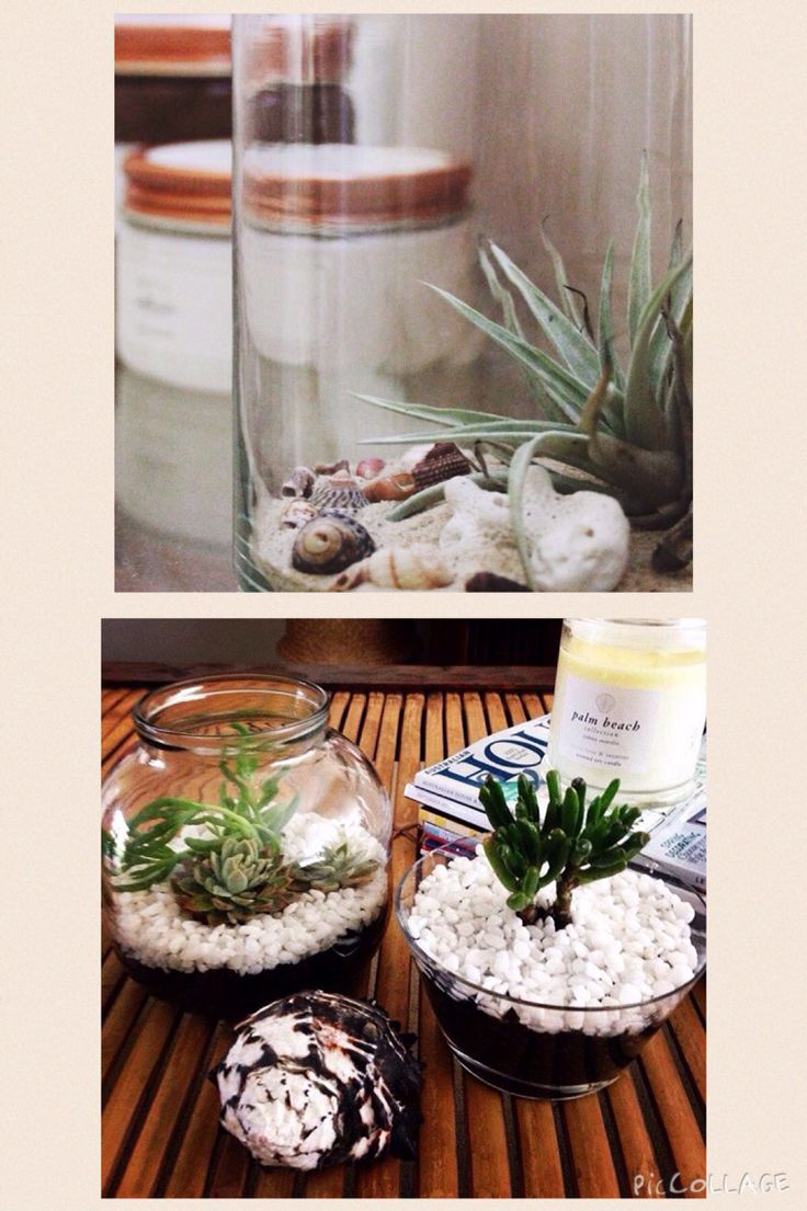 Terrarium ... Some inspiration for the bathroom or living room, in fact, any room in the house. Use a glass container/vase of your choice, put some sand, shells and an air plant or succulent plants in it. How cute is that! ~  Styled & Photographed by Annette of HHInteriors.