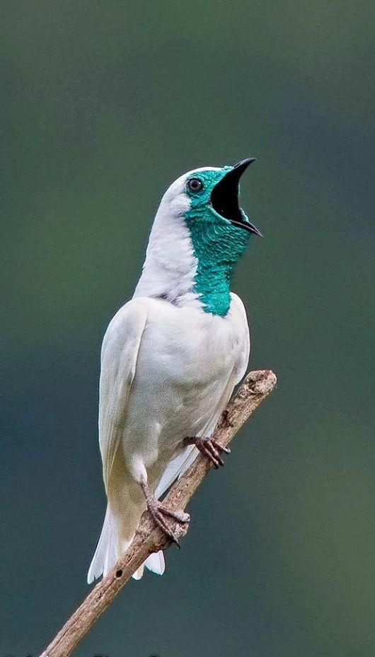 Rare Species Of Birds Best 25+ Exotic...