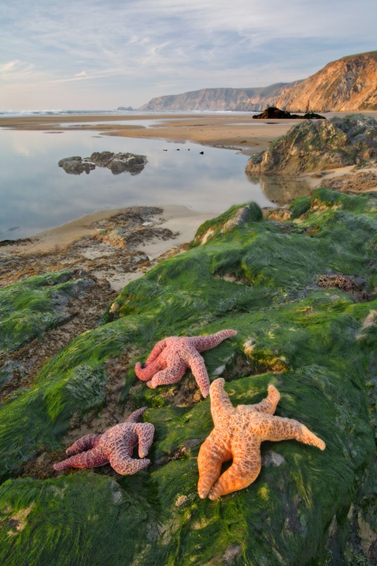 Point Reyes, Marin County, California - Three stars, during low tide at Point Reyes National Seashore.  #waterlust