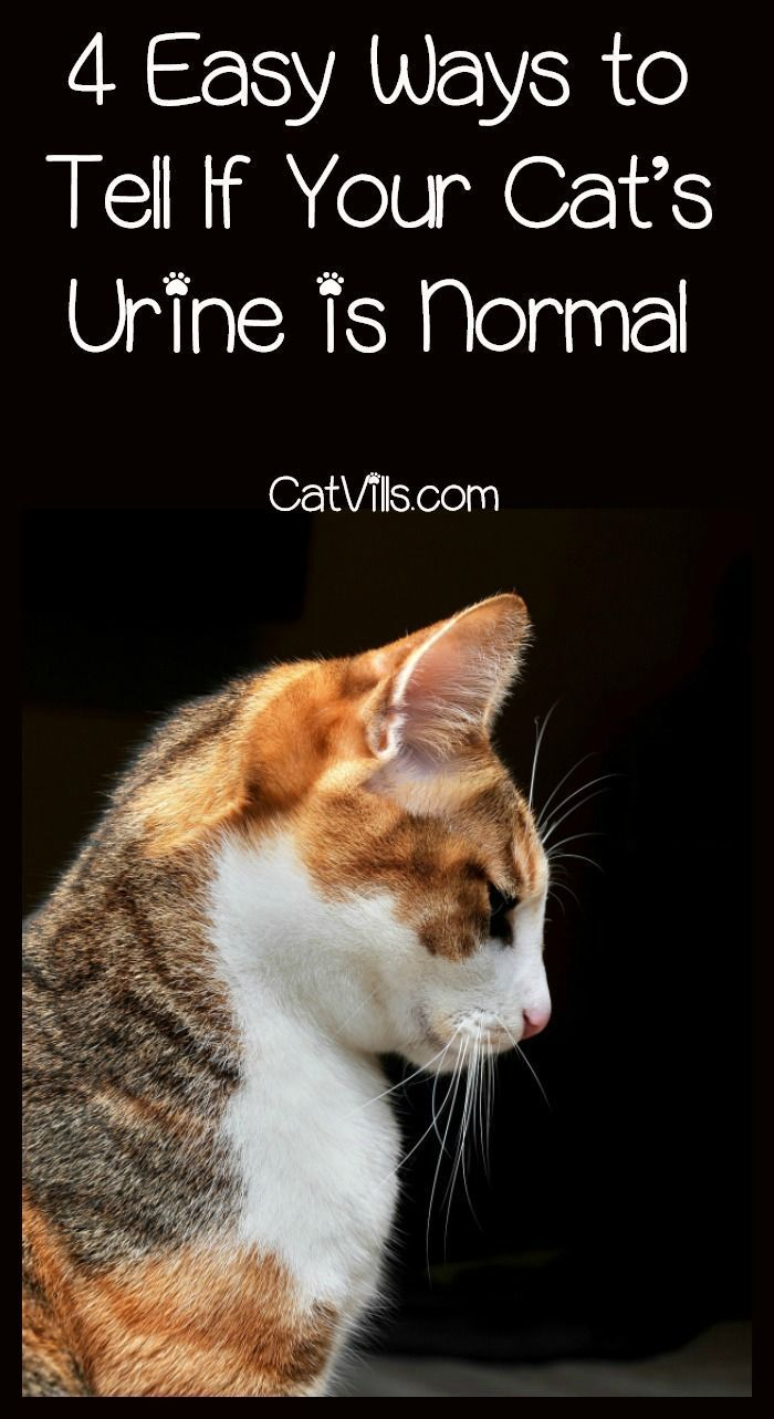 How Do You Tell If Your Cat S Urine Is Normal Check Out 4 Tips For Determining If Kitty Is Healthy Based On What Yo Cat Training Cat Urine Cat Health Problems