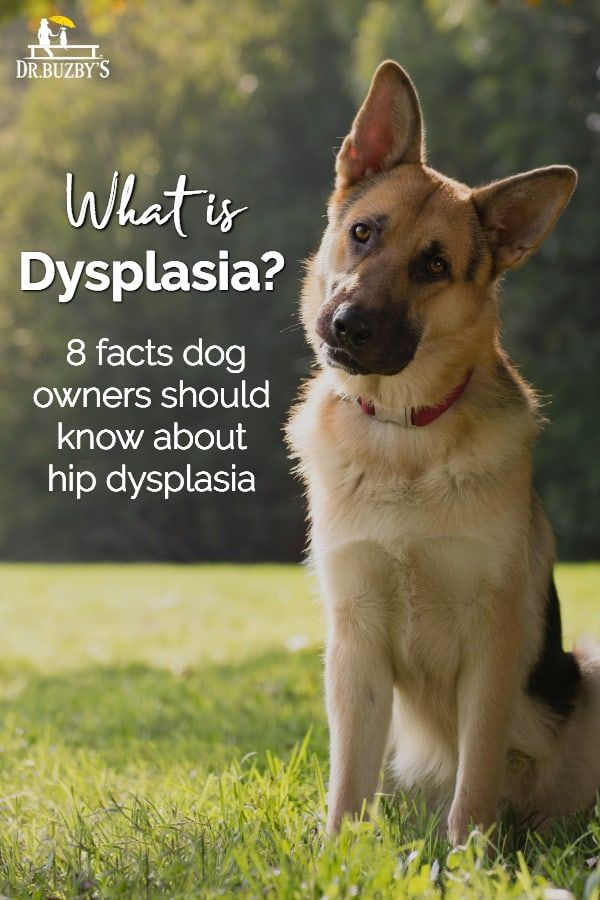 What Causes Hip Dysplasia In Dogs Hip Dysplasia Dog Insurance