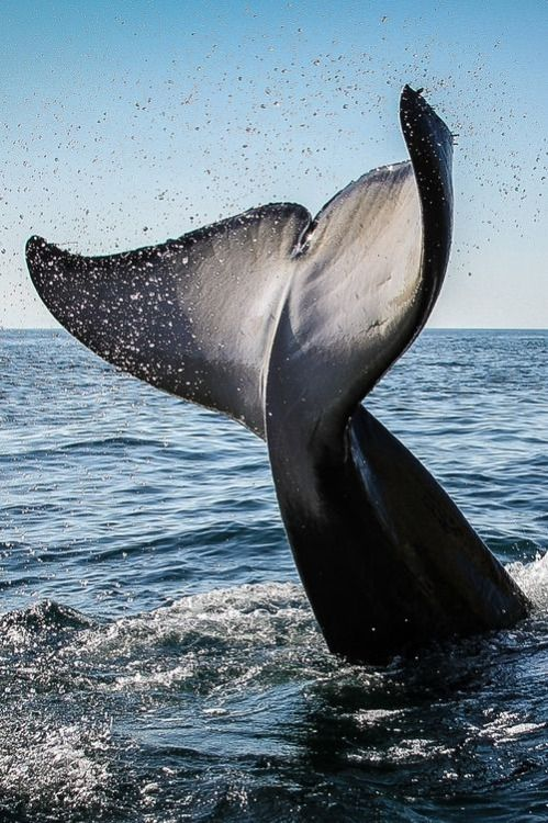 Whale tail....This is a very big tail