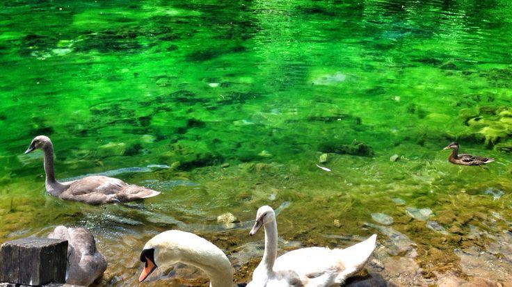 Yeşil bosna
