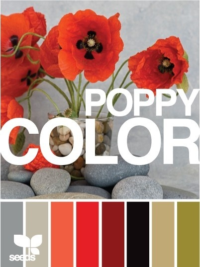 I miiight be leaning toward poppy red as the kitchen's accent color.