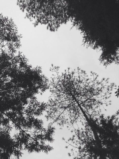 Trees and BW
