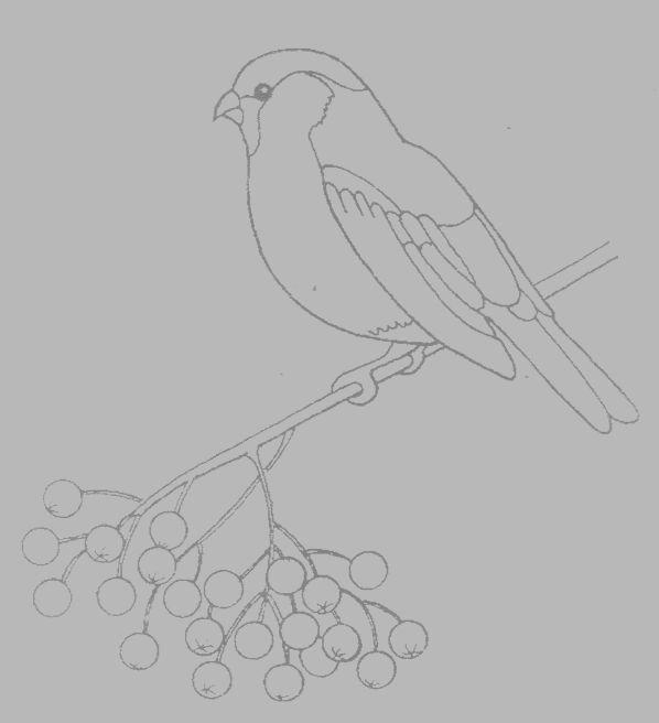 картинки карандашом птицы зимой относительные частоты попадания