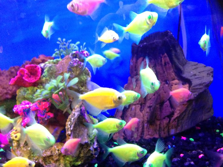 Neon fish from petco it was real cool to photograph for How much are fish at petco