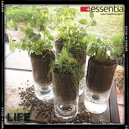17 Best Images About Plastic Bottle For Plants On