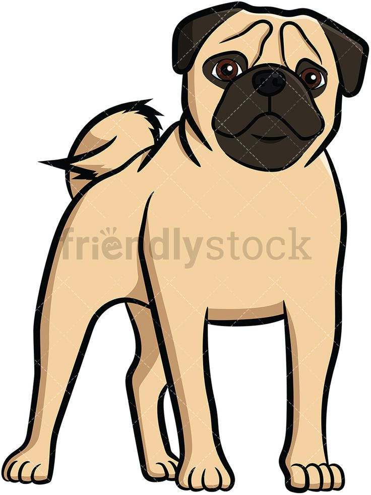 Pug Standing: Royalty-free stock vector illustration of an adorable apricot pug dog with a curly tail and wrinkly face, standing on all fours and staring. #friendlystock #clipart #cartoon #vector #stockimage #art #pug #cute #mastiff #chinese #dutch #vigilant
